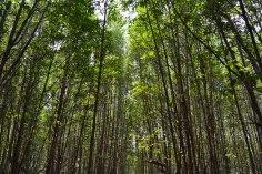 RESERVA NATURAL DE PEAM KRASAOP, KOH KONG