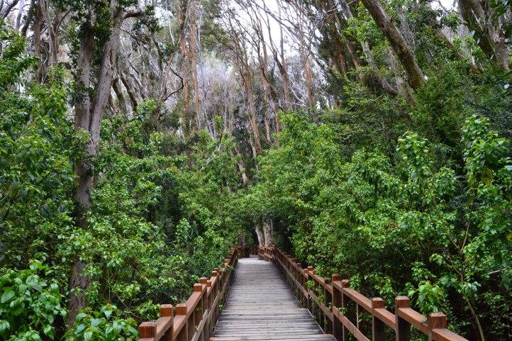 parque-nacional-los-arrayanes