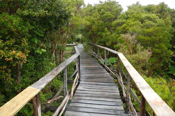 parque-nacional-chiloe5