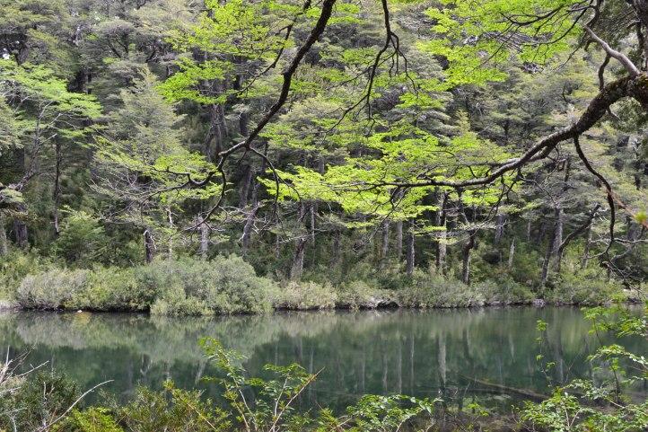 parque-nacional-huerquehue